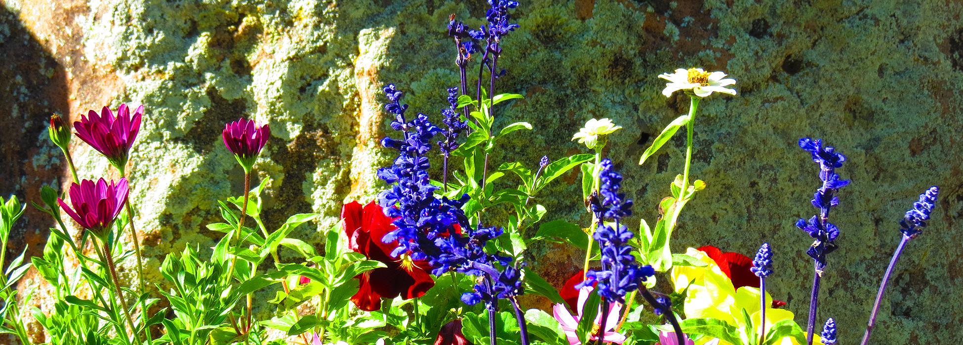 Grassroots Landscaping Gardens in Telluride