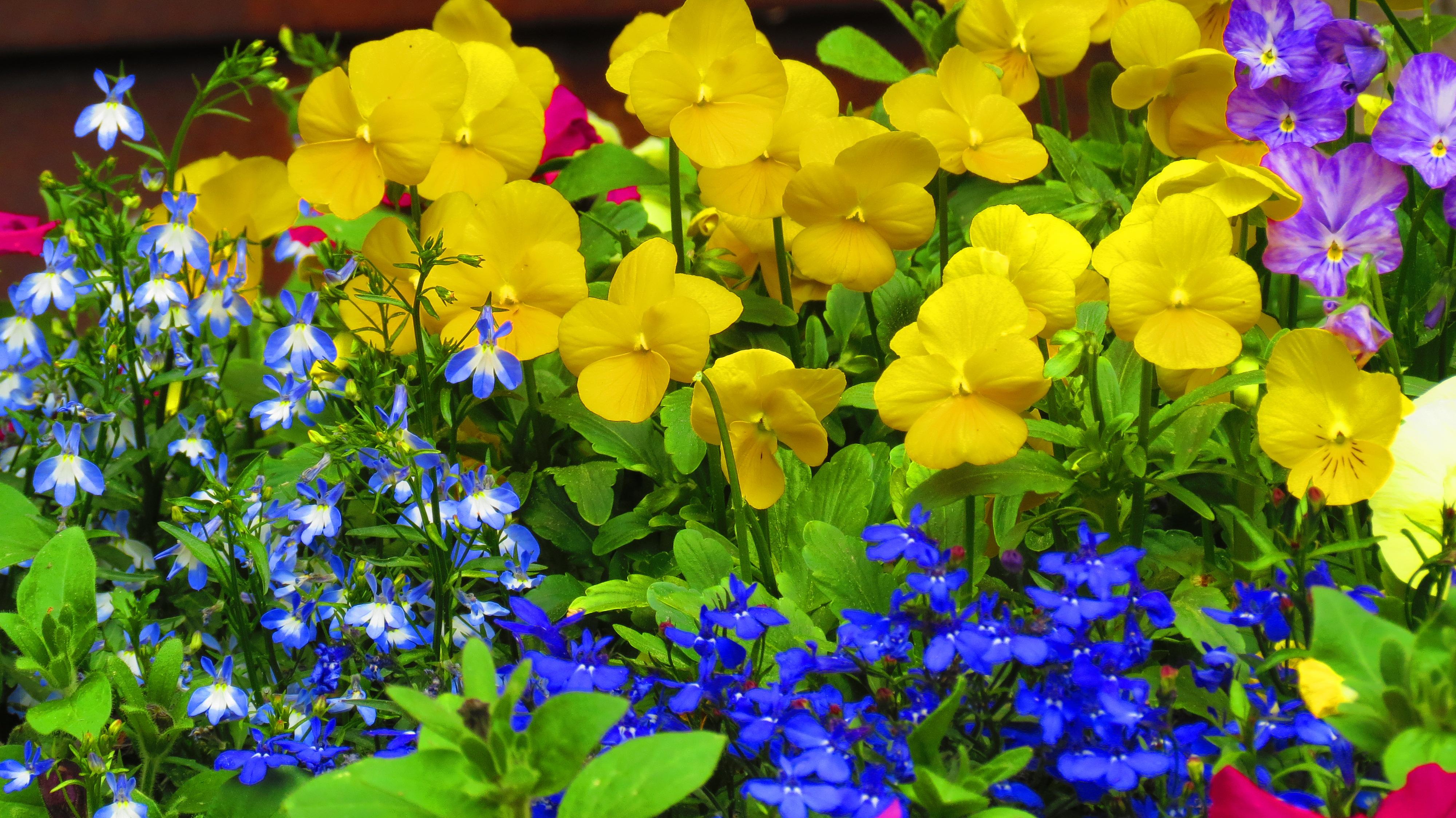 Flowers And Gardens Telluride Landscape Design